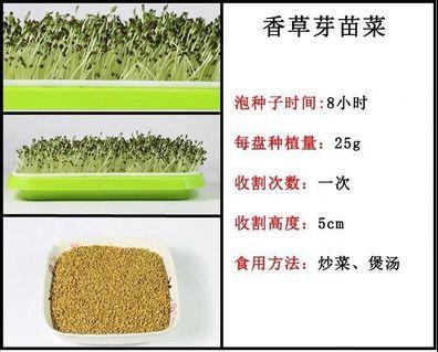 Microgreens sprouts 芽苗菜种子 - 香草( 䃼肾菜)