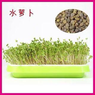 Microgreens spouts - Radish 芽苗菜种子 - 萝卜