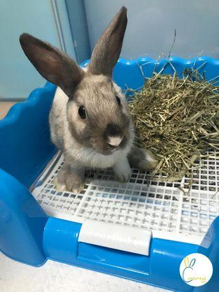 Cottontail Inn 5🌟 Rabbit Boarding