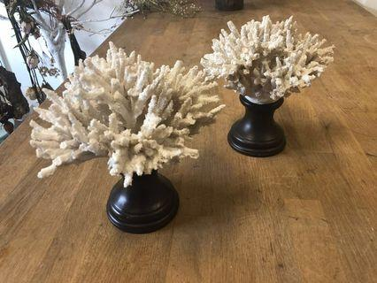 🚚 Dried coral