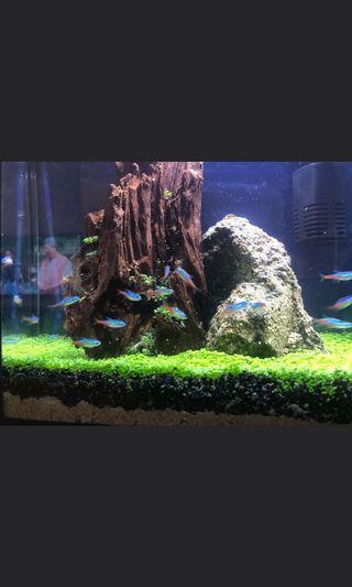 Aquarium Decoration / Aqua Scape