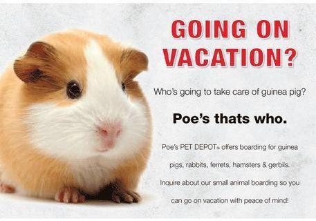 Hamsters Boarding Service!!!
