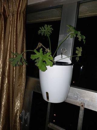 自動補充水份,新式花盆