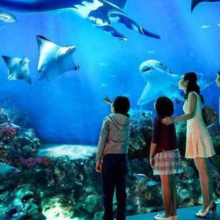 S.E.A Aquarium Child E-Tickets (4-12 Years old) Ticket by email