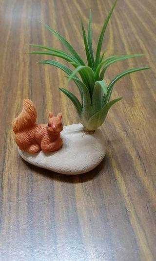 Plant, air plant decoration, birthday gift, desktop plant, indoor plant.
