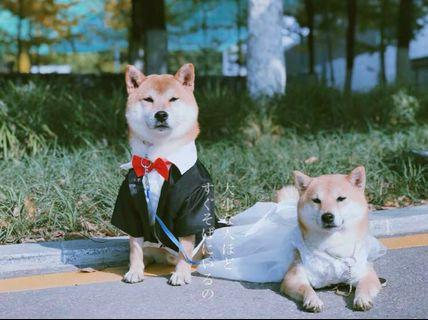 BN Wedding Season Pets Cats Dogs Puppies Tuxedo Wedding Gowns Restocked!! 🎩 👰 Bridal Photoshoot