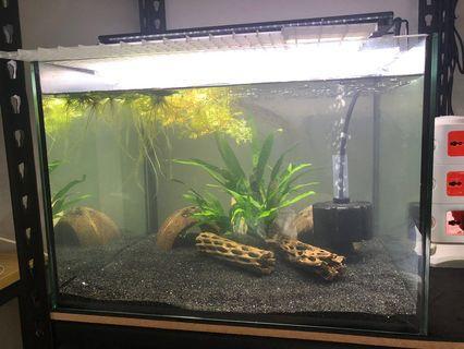 Customized fish tank 45/43/30