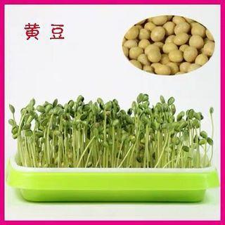 Microgreens sprouts - Pearl soybeans 芽苗菜种子 - 珍珠黄豆