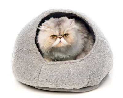 Cat bed house