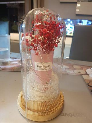 Preserved Flower in a case w lights