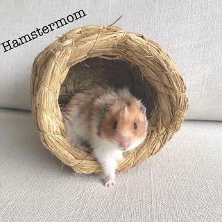 Natural Straw Woven Hideout Toy for Hamsters / Birds