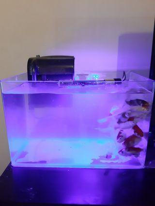 Jual Aquarium akuarium fullset lengkap bending