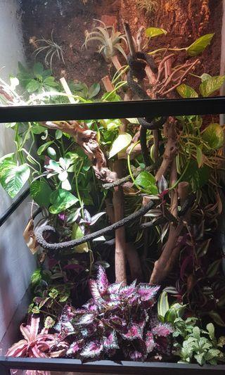 Bioactive natural habitat setup for pets