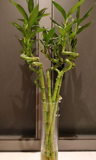 Green bamboo sticks with a vase (6 green bamboo sticks)