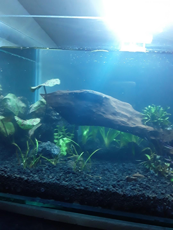 Aquarium aquascape fullset