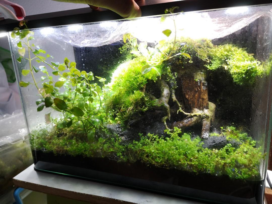 Bonsai Driftwood Aquascape Tank Pet Supplies For Fish Fish Tanks On Carousell