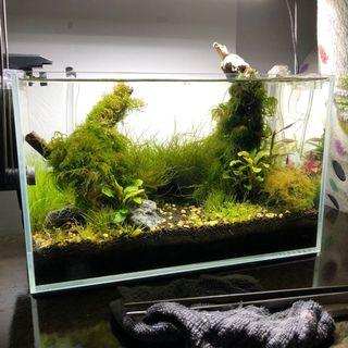 Planted Fish Shrimp Tank
