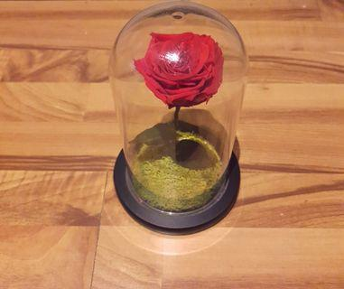 Preserved Rose in Glass Dome