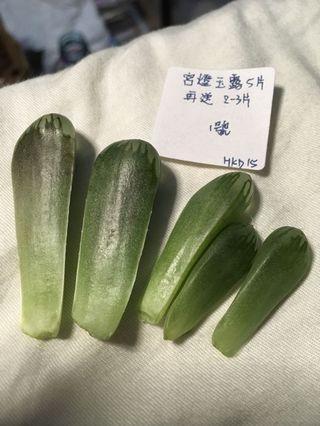 多肉植物宮燈玉露葉片葉插 逐份賣