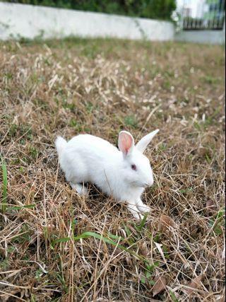 "Rabbit ""rehome"""