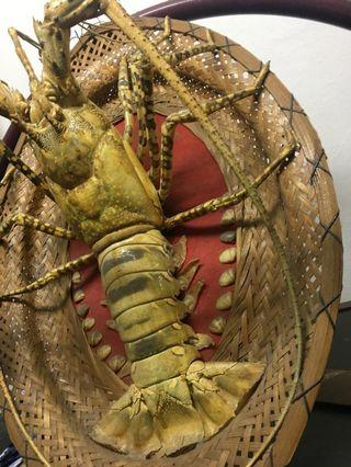 Lobster (real) artifact