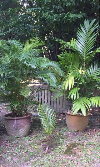 Potted Palms and Plants various at different prices