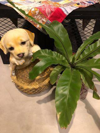 Labrador With basket