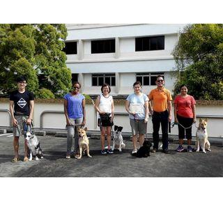Basic Dog Obedience Training Course - 06 July 2019