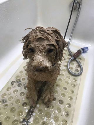 🚚 Dog grooming