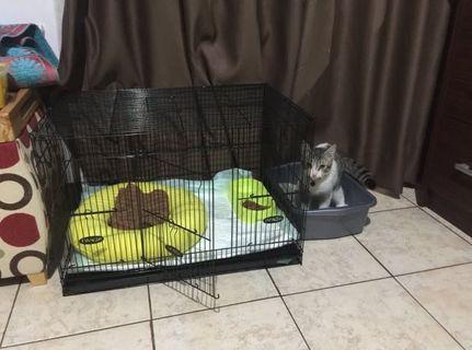Kandang Kucing Lipat + Litter Box M Preloved