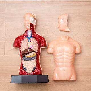 SPORT and the HUMAN BODY by Clementoni
