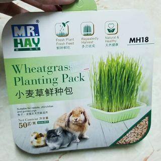 全新寵物小麥草種植包 適合兔子龍貓天竺鼠