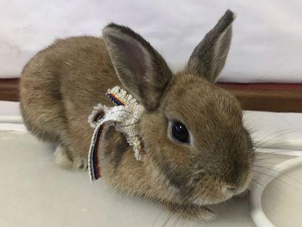 Rabbit Ribbon Bow Collar tag name chain bunny