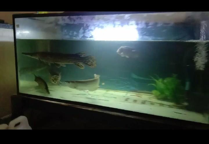 Aquarium 150x50x50