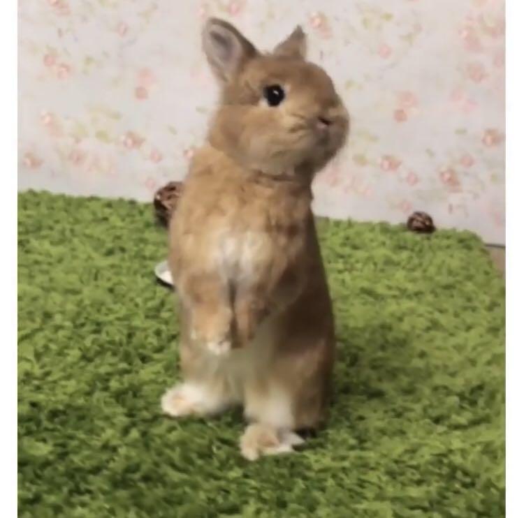 New Pet play mat grass for rabbits interior design playground