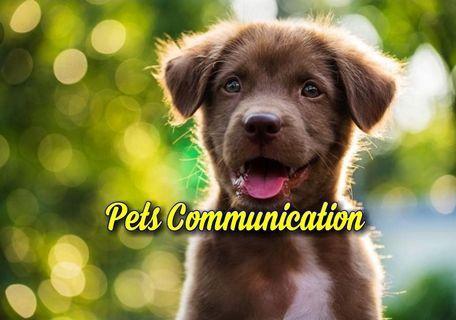 Pets Communication