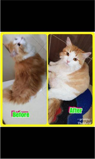 Affordable cat grooming
