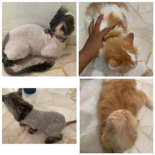 🚚 Affordable cat grooming
