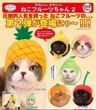 貓搞野裝飾😻