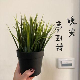 🚚 裝飾盆栽