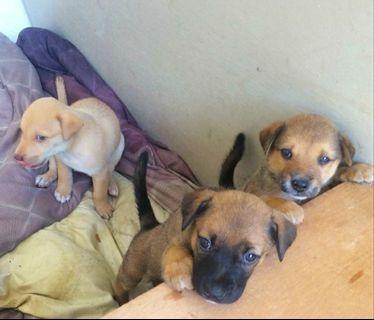 Baby pups, mixed breed