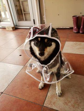 狗狗雨衣披風透明