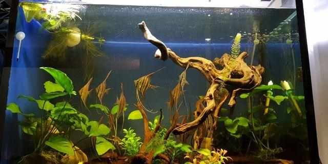 full set 3ft by 50cm by 2ft customised fish tank and stand