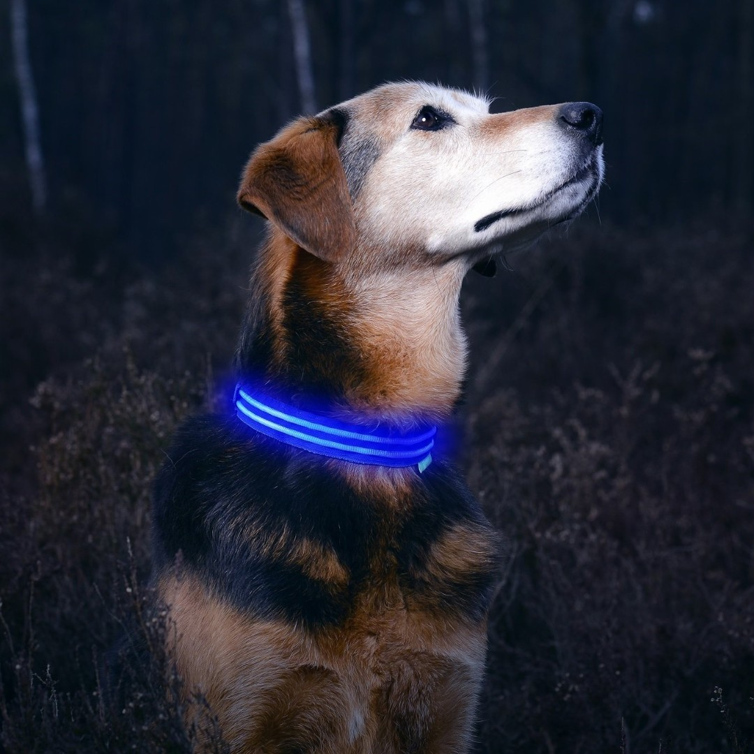 USB Rechargeable Safe /& Seen Available in 6 Colors /& 6 Sizes Illumiseen LED Dog Collar Makes Your Dog Visible