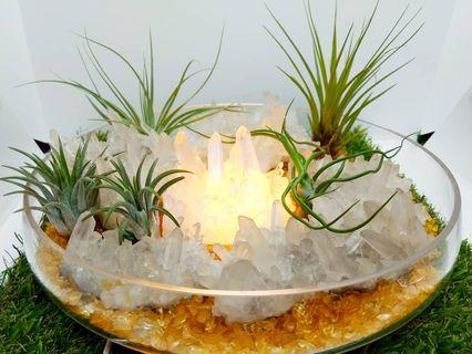 Crystal and Airplants
