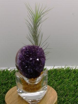 Uruguay Amethyst Cluster with Airplants