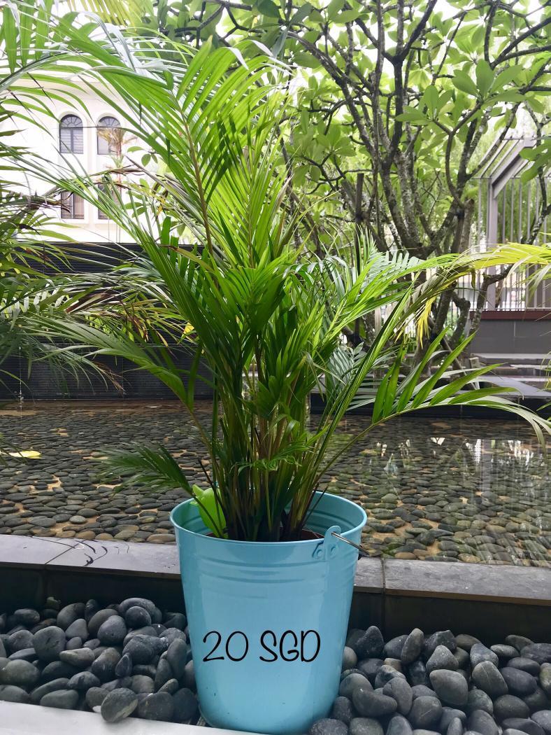Plants with Pot