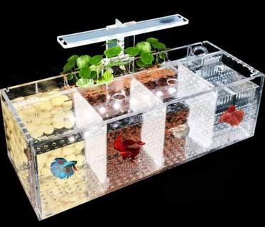 Father's DAY SALES !!! Ex Stock !!! Betta Tank with 4 Compartment betta tank !!! Sleek and exquisite design !!! Including pump and lighting !! NEW !!!!!!  Price exclude fish, plants and filter media!!
