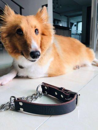 [Instock] MightyPaw Leather Martingale Collar [Medium]