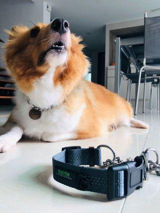 [BN Instock] MightyPaws Martingale Collar